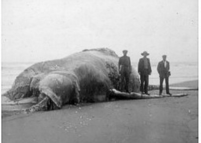 Beached Whale 1920